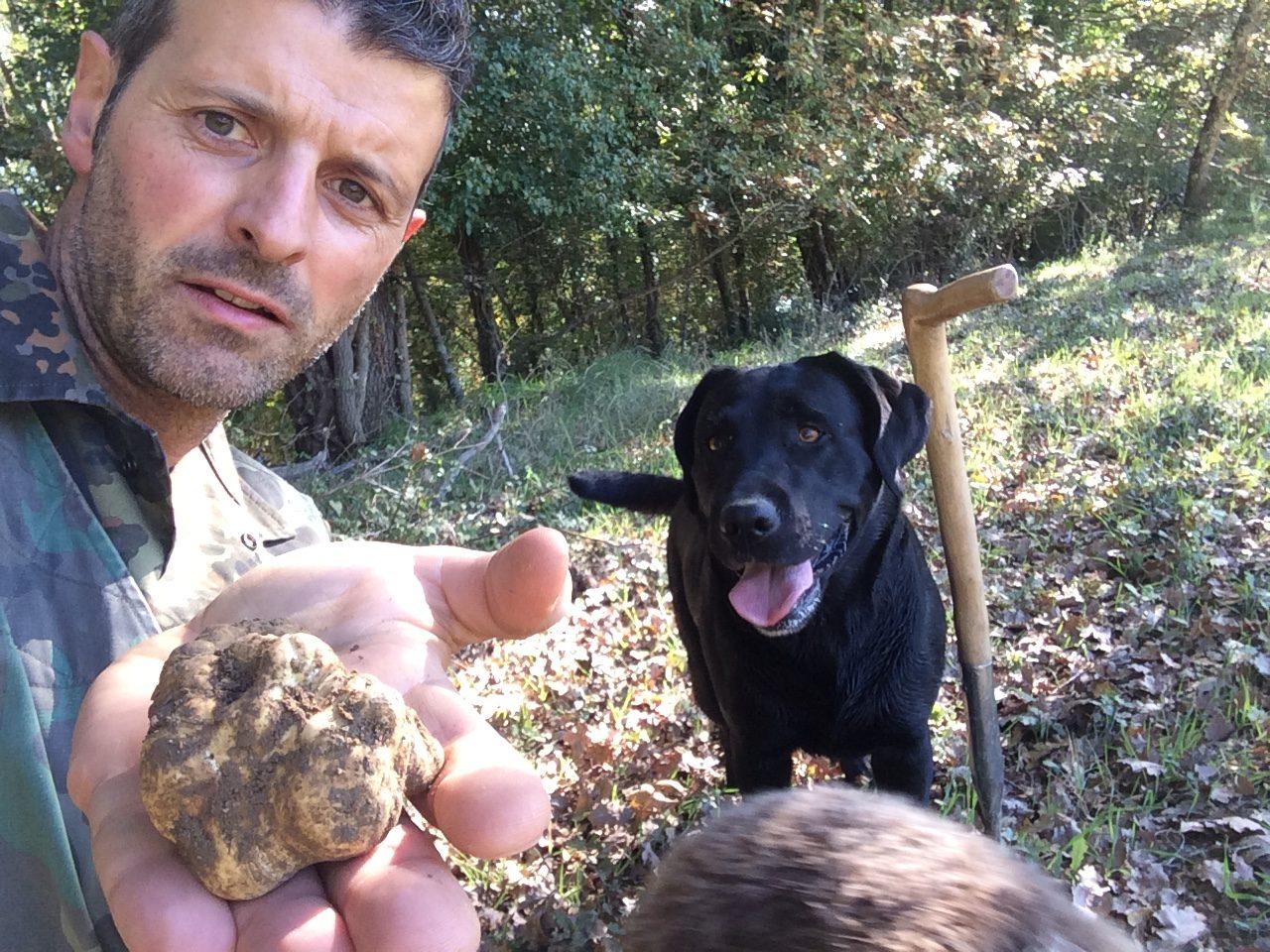 Alessandro di Siena Tartufi mostra il bel tartufo bianco appena trovato da Moka durante truffle hunting
