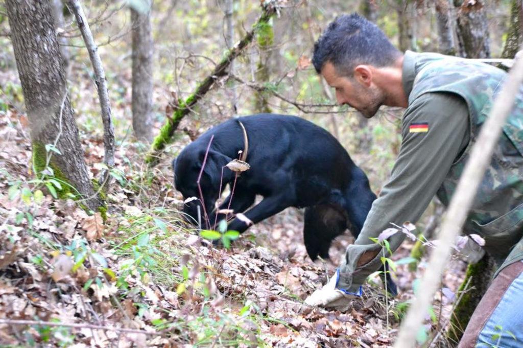 SIENA TARTUFI - La ricerca del tartufo nel bosco - Alessandro e Pepita durante truffle hunting
