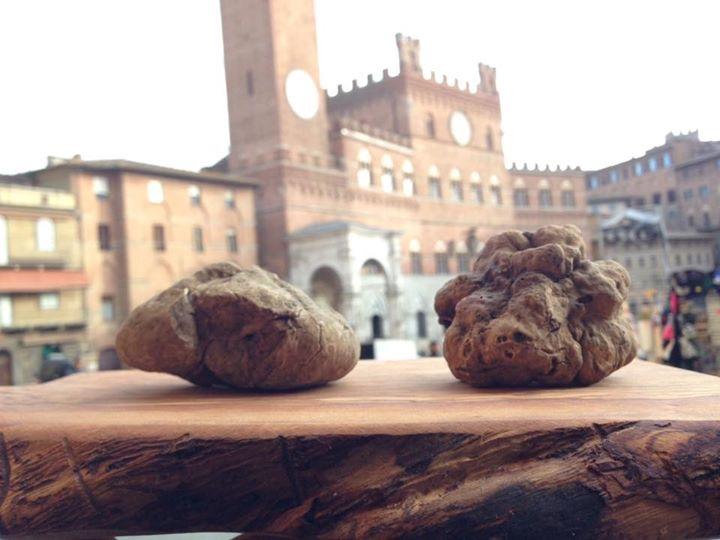 Due begli esemplari di tartufo bianco a Siena Tartufi in Piazza del Campo a Siena - Toscana