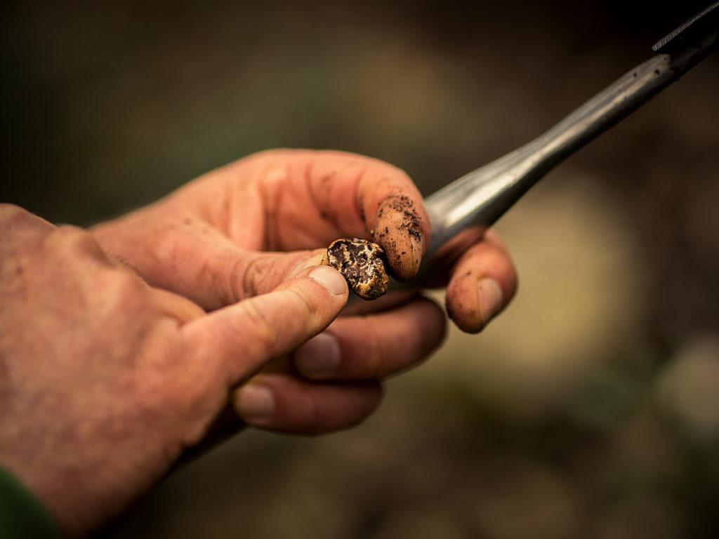 Alessandro Pellegrini di Siena Tartufi nel bosco durante un truffle hunting - dettaglio - foto di Marco Cheli