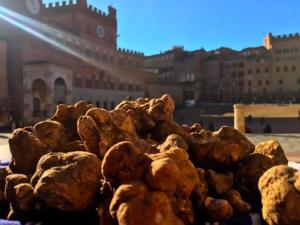 Siena Tartufi - Il tartufo bianco fresco in Piazza del Campo