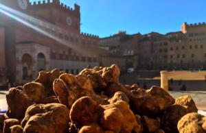 Siena Tartufi - Il tartufo bianco fresco in Piazza del Campo slider